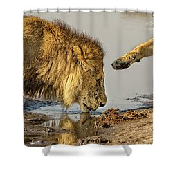 Lion Affection Shower Curtain