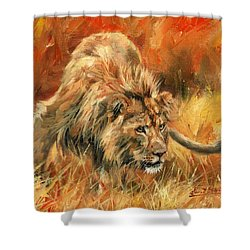Shower Curtain featuring the painting Lion Alert by David Stribbling