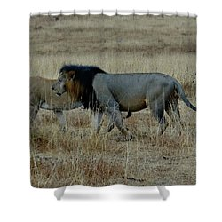 Lion And Pregnant Lioness Walking Shower Curtain