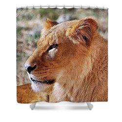 Lion Around Shower Curtain