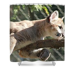 Shower Curtain featuring the photograph Lion Around by Laddie Halupa