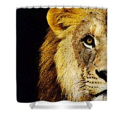 Lion Art - Face Off Shower Curtain by Sharon Cummings