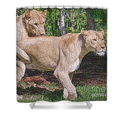 Shower Curtain featuring the painting Lion Backer by Judy Kay