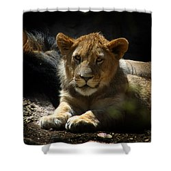 Lion Cub Shower Curtain by Anthony Jones