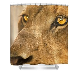 Lion Face Shower Curtain by Carolyn Marshall