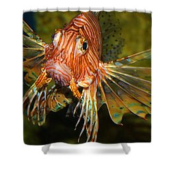 Lion Fish 2 Shower Curtain by Kathryn Meyer