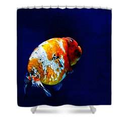 Lion Head Goldfish 2 Shower Curtain