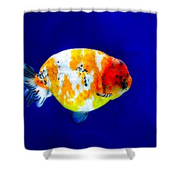 Lion Head Goldfish 3 Shower Curtain