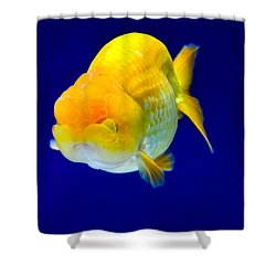 Lion Head Goldfish 5 Shower Curtain