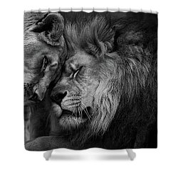 Lion In Love 2 Shower Curtain
