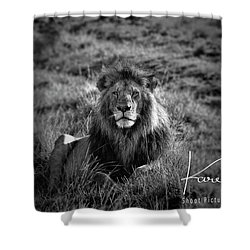 Shower Curtain featuring the photograph Lion King by Karen Lewis