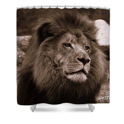 Shower Curtain featuring the photograph Lion King by Lisa L Silva
