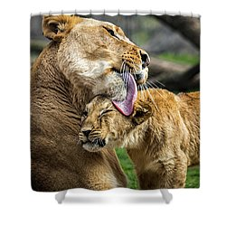 Lion Mother Licking Her Cub Shower Curtain