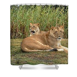 Shower Curtain featuring the photograph Lion Pride by John Black
