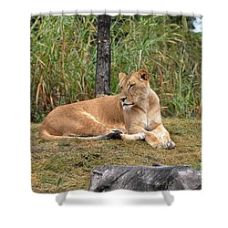 Shower Curtain featuring the photograph Lion Queen by John Black