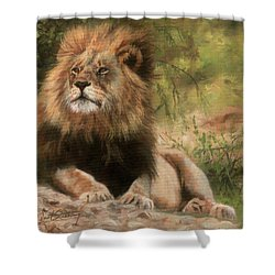 Shower Curtain featuring the painting Lion Resting by David Stribbling
