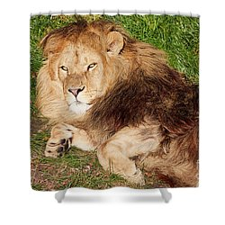 Shower Curtain featuring the photograph Lion Resting In The Sun by Nick Biemans