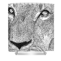 Lion Sketch Shower Curtain