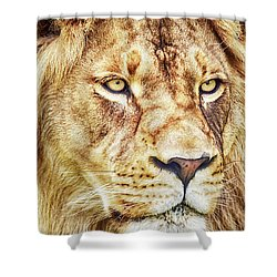 Lion-the King Of The Jungle Large Canvas Art, Canvas Print, Large Art, Large Wall Decor, Home Decor Shower Curtain by David Millenheft