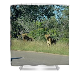Lion Watch Shower Curtain