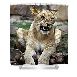 Lioness 2 Shower Curtain