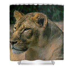 Lioness Shower Curtain