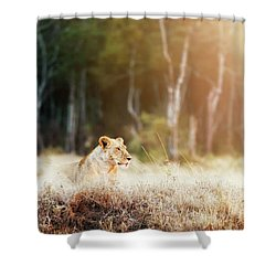 Lioness In Morning Sunlight After Breakfast Shower Curtain