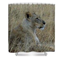 Lioness In The Grass Shower Curtain