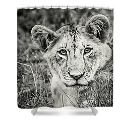 Lioness Portrait Shower Curtain