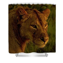 Lioness-signed-#6947 Shower Curtain
