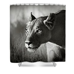 Lioness Stalking Shower Curtain