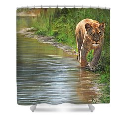 Shower Curtain featuring the painting Lioness. Water's Edge by David Stribbling