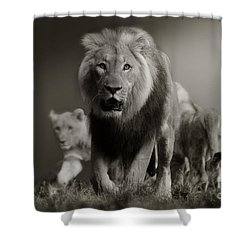 Shower Curtain featuring the photograph Lions On Their Way by Christine Sponchia