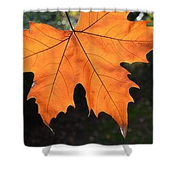Shower Curtain featuring the photograph Liquid Amber Leaf by Jocelyn Friis