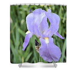 Lissy Iris Shower Curtain by Marsha Heiken