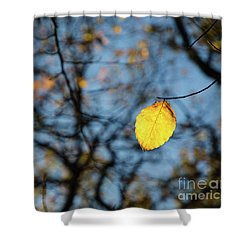 Shower Curtain featuring the photograph Lit Lone Leaf by Kennerth and Birgitta Kullman