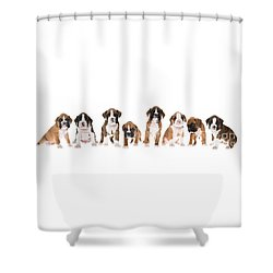 Litter Of Boxer Puppies Shower Curtain