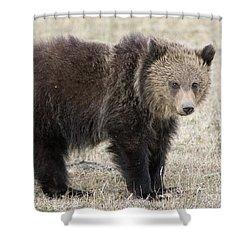 Little America Cub Shower Curtain