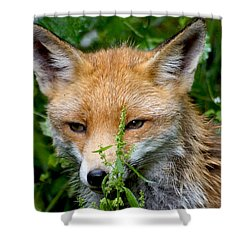 Little Baby Fox Shower Curtain