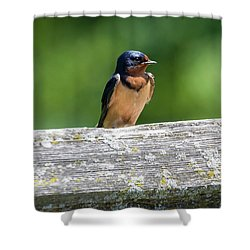 Shower Curtain featuring the photograph Little Barn Swallow by Ricky L Jones