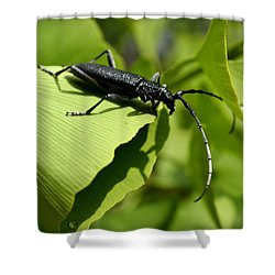 Little Beetle Shower Curtain