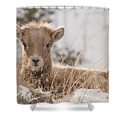 Little Bighorn Shower Curtain