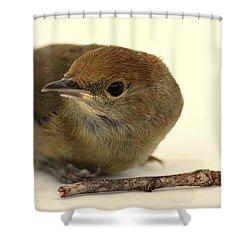 Little Bird 2 Shower Curtain by Pierre Van Dijk