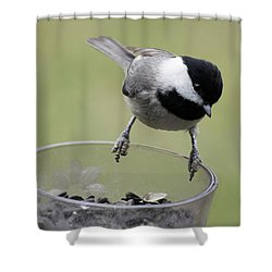 Little Bird Looking For A Handout Shower Curtain