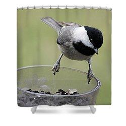 Little Bird Looking For A Handout Shower Curtain