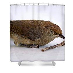 Little Bird  Shower Curtain by Pierre Van Dijk