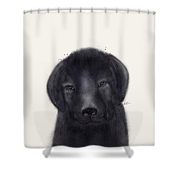 Shower Curtain featuring the painting Little Black Labrador by Bri B