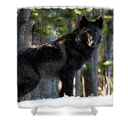 Little Blackie Shower Curtain