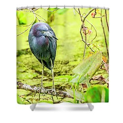 Little Blue Heron At Ollie's Pond Shower Curtain