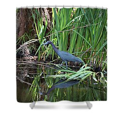 Shower Curtain featuring the photograph Little Blue Heron by Sandy Keeton